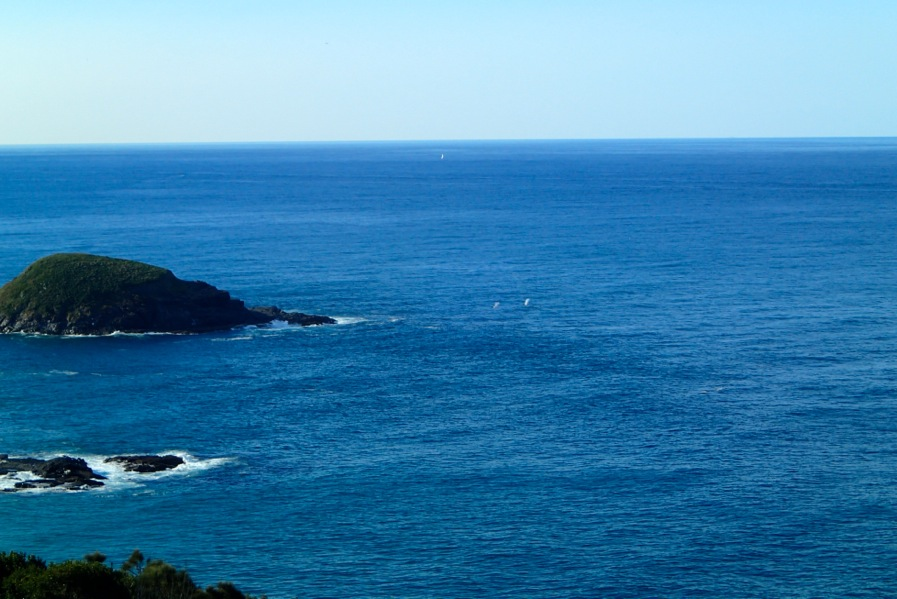 Whales from the Smokey yCape Lighthouse